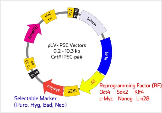 Lentiviral Ipsc Vector Protocol Lentiviral Production