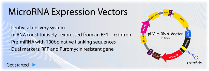 miRNA expression vectors
